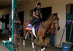 DEL MAR, CA - NOVEMBER 01: Lady Eli, owned by Sheep Pond Partners and trained by Chad C. Brown, is walked before exercising in preparation for Breeders' Cup Filly & Mare Turf at Del Mar Thoroughbred Club on November 1, 2017 in Del Mar, California. (Photo by Casey Phillips/Eclipse Sportswire/Breeders Cup)