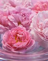 An arrangement of rose heads floats in a glass bowl