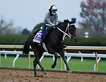 Vequist, trained by trainer Robert E. Reid Jr., exercises in preparation for the Breeders' Cup Juvenile Fillies at Keeneland Racetrack in Lexington, Kentucky on October 30, 2020.