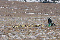Sunday March 11, 2007   ----    Currently in first place, Jeff King runs on the tundra nearing Unalakleet on Sunday afternoon.