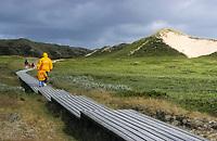 Holzbohlenweg führt durch Dünen, Dünenlandschaft auf der Insel Sylt, Nordsee, Schleswig-Holstein