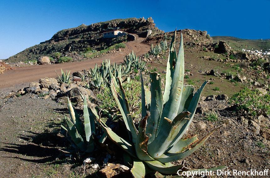 Spanien, Kanarische Inseln, Gomera, Agave beim Mirador del Santo