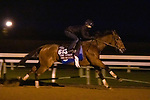 Into Mystic, trained by trainer Brendan P. Walsh, exercises in preparation for the Breeders' Cup Turf Sprint at Keeneland Racetrack in Lexington, Kentucky on October 31, 2020.