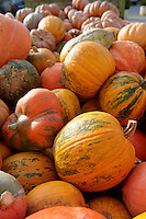 Fresh whole pumpkins and squash