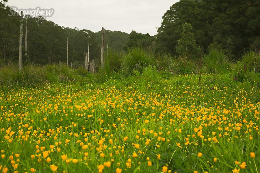 Image Ref: CA609<br /> Location: Lake Elizabeth, Forrest<br /> Date of Shot: 20.10.18