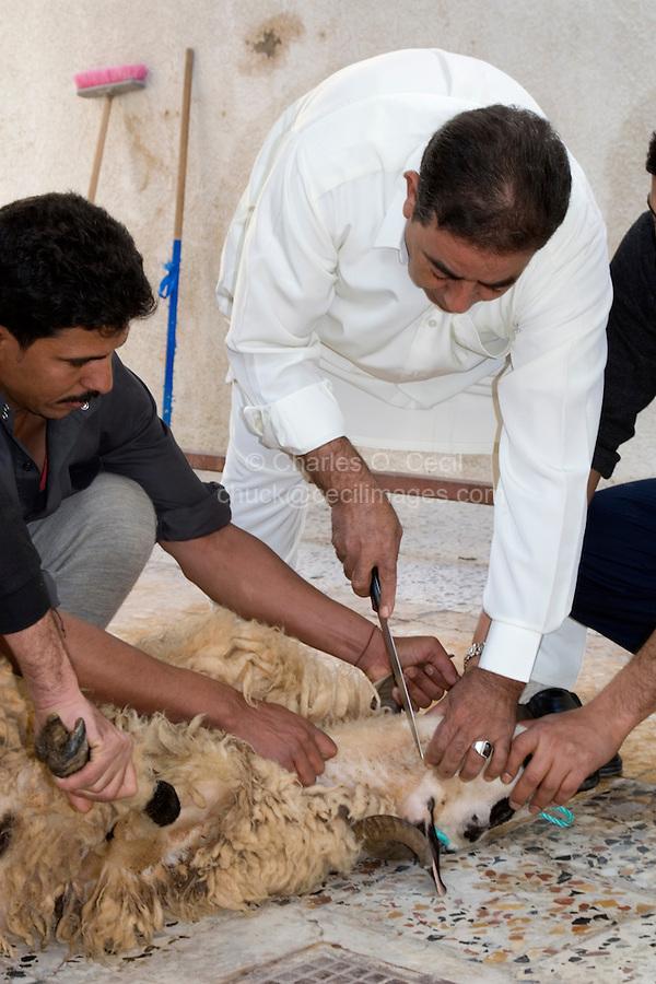 Tripoli, Libya - Eid al-Adha, Id al-Adha.  Preparing to Sacrifice Sheep for the annual feast when Muslims commemorate God's mercy in allowing Abraham to sacrifice a ram instead of his son, to prove his faith.