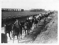 With the Canadians on the western front<br /> Description<br /> <br /> Canadian artillery horses on the way to water