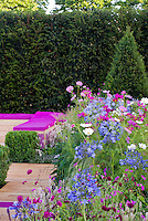 Cosmos, Agapanthus, ornamental grass, garden bench in repeating matching and coordinated colors and harmony for pretty landscaping