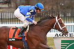 Alpha with Ramon Dominguez wins the Grade III Withers at Aqueduct, 1 1/16 miles, 3 year olds.