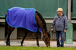January 23, 2020: Trainer Peter Miller grazes Mo Forza during preparations for the Pegasus World Cup Invitational at Gulfstream Park Race Track in Hallandale Beach, Florida. Scott Serio/Eclipse Sportswire/CSM
