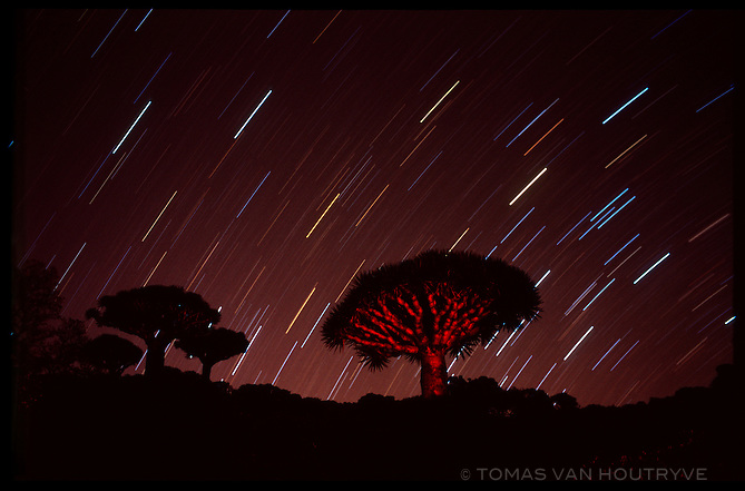 Star trails are seen behind Dragon's Blood Trees (Dracaena cinnabari) during a time exposure in the Skund mountains on the island of Socotra, Yemen on Wednesday, 25 May 2005.<br />