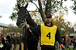 17 October 2009: Gozzip Girl in the paddock before the G1 Queen Elizabeth Stakes at Keeneland Race Course in Lexington, Kentucky.