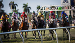 HALLANDALE FL - FEBRUARY 27: A field of horses races over the turf course at Gulfstream Park on February 27, 2016 in Hallandale, Florida.(Photo by Alex Evers/Eclipse Sportswire/Getty Images)