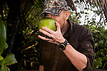 Jaguar (Panthera onca) biologist, Ian Thomson, drinking coconut on beach, Coastal Jaguar Conservation Project, Tortuguero National Park, Costa Rica