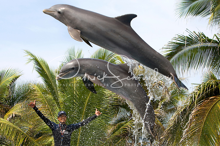 A dolphin trainer at Delfiniti Ixtapa in downtown Ixtapa commands the dolphins to jump during a show for tourists. (photo taken August 2007) Photo by Patrick Schneider Photo.com