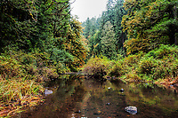 The South Fork of Silver Creek during the Autumn at Silver Falls State Park in Oregon, USA.