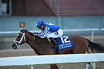 May 2, 2020: By my Standards (12) with jockey Gabriel Saez aboard during the Oaklawn Handicap at Oaklawn Racing Casino Resort in Hot Springs, Arkansas on May 2, 2020. Justin Manning/Eclipse Sportswire/CSM