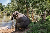 washing elephant  at the Elephant camp Dubare forest . Elephant<br /> Elefante seduto sui bordi del fiume