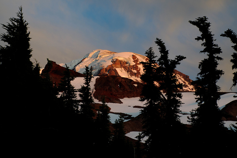 Mount Rainier framed by subalpine firs in Spray Park meadows, Mount Rainier National Park, Washington State, USA