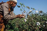INDIA, Madhya Pradesh, Khargoan, Adivasi women harvest organic cotton at farm in the biore project formerly known as Maikaal project / INDIEN Madhya Pradesh, Adivasi Frauen bei Ernte von Biobaumwolle im biore Projekt der Remei AG im Narmada Tal