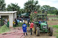 ZAMBIA, Mazabuka, medium-scale farm of Devlin Chilala, grate or shred corn for animal fodder