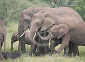 Dr. Xiong, ANIMALS, wildlife, photos, AUJX116,#a#
