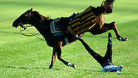 Jockey Vaslav Moravec is dragged after he fell from a horse and caught his foot in the stirrup during a dramatic incident at track work. He was not seriously injured.