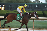 HOT SPRINGS, AR - MARCH 12: Terra Promessa #5 with jockey Ricardo Santana Jr. celebrating after crossing the finish line in the Honeybee Stakes at Oaklawn Park on March 12, 2016 in Hot Springs, Arkansas. (Photo by Justin Manning)