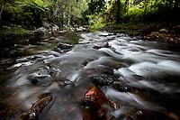 Red Leaf in Rainforest Stream, Lamington National Park, Queensland