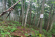 Forest on the northern slopes of Mount Jim in Kinsman Notch of Woodstock, New Hampshire USA during the summer months.