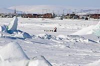 Aliy Zirkles team mushes on frozen Bering Sea on outskirts of Nome Alaska 2006 Iditarod Winter