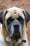 Portrait of a dog in Bahia, Brazil.