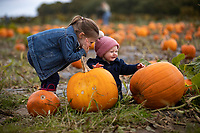 BNPS.co.uk (01202) 558833. <br /> Pic: CorinMesser/BNPS<br /> <br /> Pictured: Eryn Jones, 10 months and sister orla, 3, picking pumpkins. <br /> <br /> P p p pick up a pumpkin...<br /> <br /> Families flock to Sopley Farm near Christchurch, Dorset to pick out a pumpkin in time for halloween.