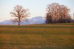 Europa, DEU, Deutschland, Bayern, Landkreis Weilheim-Schongau, Oberbayern, Abendstimmung, Typische Landschaft, Baeume, Natur, Umwelt, Landschaft, Jahreszeiten, Stimmungen, Landschaftsfotografie, Landschaften, Landschaftsphoto, Landschaftsphotographie, Wetter, Wetterelemente, Wetterlage, Wetterkunde, Witterung, Witterungsbedingungen, Wettererscheinungen, Meteorologie, Wettervorhersage, <br /> <br /> [Fuer die Nutzung gelten die jeweils gueltigen Allgemeinen Liefer-und Geschaeftsbedingungen. Nutzung nur gegen Verwendungsmeldung und Nachweis. Download der AGB unter http://www.image-box.com oder werden auf Anfrage zugesendet. Freigabe ist vorher erforderlich. Jede Nutzung des Fotos ist honorarpflichtig gemaess derzeit gueltiger MFM Liste - Kontakt, Uwe Schmid-Fotografie, Duisburg, Tel. (+49).2065.677997, ..archiv@image-box.com, www.image-box.com]