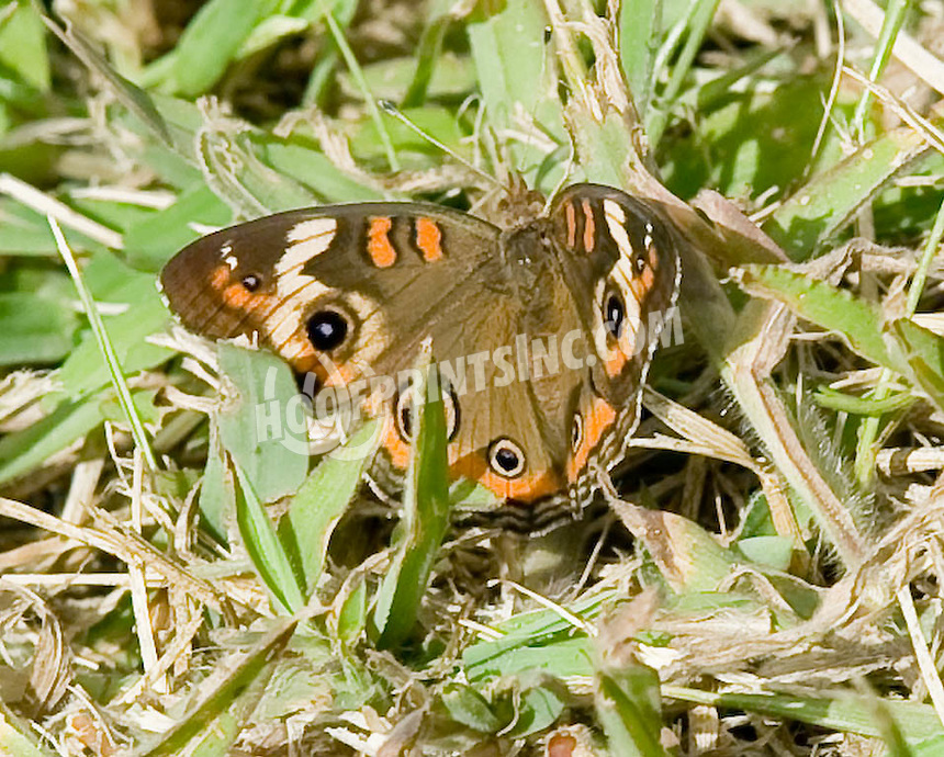 butterfly  at Delaware Park on 9/14/10