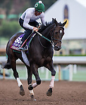 ARCADIA, CA - OCT 31: Celestine, owned by Phaedrus Flights LLC and trained by William I. Mott, exercises in preparation for the Breeders' Cup Turf Sprint at Santa Anita Park on October 31, 2016 in Arcadia, California. (Photo by Douglas DeFelice/Eclipse Sportswire/Breeders Cup)