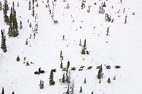 Aerial view of Jeff King on the trail in scrub brush & trees just before Cripple  Thursday afternoon during the 2008 Iditarod