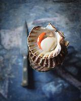 Coquille Saint-Jacques / Sea scallop - Stylisme : Valérie LHOMME