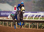 DEL MAR, CA - OCTOBER 28:  Hunt, owned by Mike House and trained by Philip D'Amato, exercises in preparation for Longines Breeders' Cup Turf at Del Mar Thoroughbred Club on October 28, 2017 in Del Mar, California. (Photo by Alex Evers/Eclipse Sportswire/Breeders Cup)