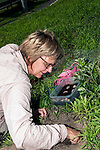 Turtle biologist, Julie Lisk with Zoo New England carefully excavates out Wood turtle nest searching for fertilized eggs.