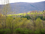 Spring Foliage in the Berkshire Mountains, New England, USA