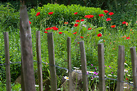 Unser Naturgarten in Hammer, Garten, insektenfreundlicher Garten, vogelfreundlicher Garten, blütenreich, Wildblumen, Wildblumengarten, Gartenzaun, Zaun, Staketenzaun, Stakettenzaun, Lattenzaun, Holzzaun, Rollzaun, garden fence, fence, hash mark, hashmark, batten fence, lattice fence, lattice fencing, paling fence