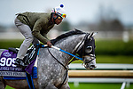 October 30, 2020: County Final, trained by trainer Steven M. Asmussen, exercises in preparation for the Breeders' Cup Juvenile Turf Sprint at Keeneland Racetrack in Lexington, Kentucky on October 30, 2020. Alex Evers/Eclipse Sportswire/Breeders Cup