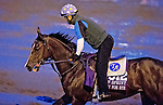 October 27, 2015 :  Ready for Rye, trained by Thomas Albertrani and owned by Rick Westerman, exercises in preparation for the Breeders' Cup Turf Sprint at Keeneland Race Track in Lexington, Kentucky on October 27, 2015.  Scott Serio/ESW/CSM