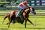 New York, NY - JUNE 10: Da Big Hoss, #5  with Florent Geroux aboard. wins the  Belmont Gold Cup Invitational at Belmont Park on JUNE 10, 2016, in Elmont, NY. (Photo by Sue Kawczynski/Eclipse Sportswire/Getty Images)