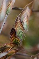 Phoenix Perennials - November