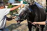 DEL MAR,CA-AUGUST 17: Arrogate is refreshed by shower at Del Mar Race Track on August 17,2017 in Del Mar,California (Photo by Kaz Ishida/Eclipse Sportswire/Getty Images)