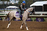 DEL MAR, CA - NOVEMBER 01: Iron Fist, owned by Whispering Oaks Farm and trained by Steven M. Asmussen, walks on the track during morning workouts at Del Mar Thoroughbred Club on November 1, 2017 in Del Mar, California. (Photo by Michael McInally/Eclipse Sportswire/Breeders Cup)