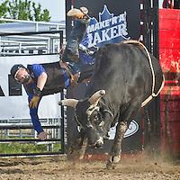 Rodeo Harrow, 2011