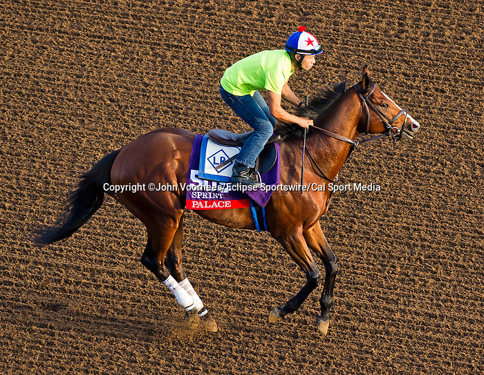 October 27, 2014:  Palace, trained by Linda Rice, exercises in preparation for the Breeders' Cup Xpressbet Sprint at Santa Anita Race Course in Arcadia, California on October 27, 2014. John Voorhees/ESW/CSM